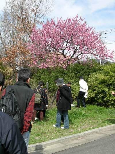 紅の桃の花白い梅の花がここちよい。