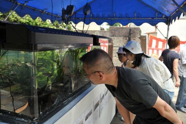 緑と清流課の職員が早朝から総出で捕獲した鮎やオイカワなどの水の生き物展示