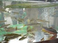 用水であそぼう(5) 2011-07-30